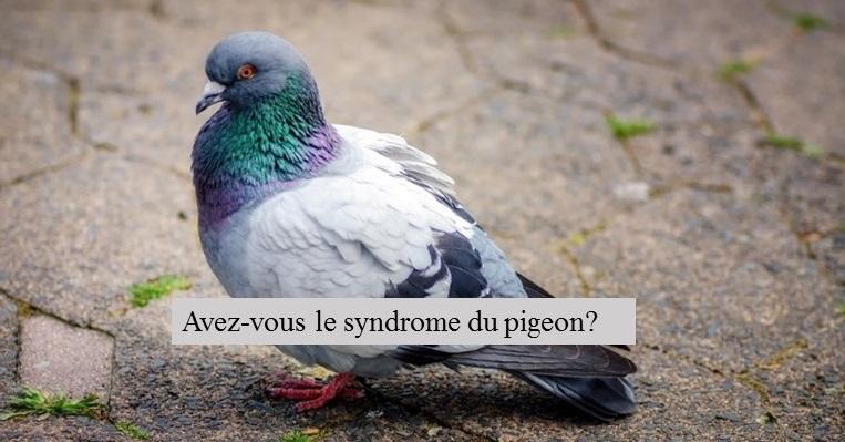 Avez-vous le syndrome du pigeon.
